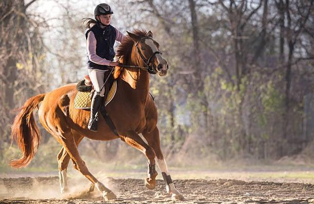 balans is als ruiter en paard - Stress